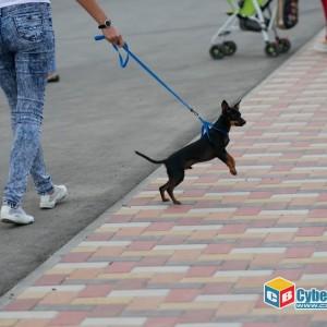 В Новопавловске отпраздновали день молодёжи (фото 15)
