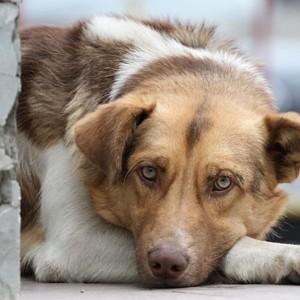 Почему отлов бездомных собак в Новопавловске не работает