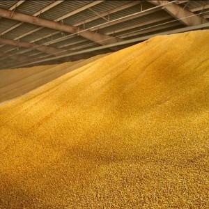 Охранник склада в Новопавловске вывез 10 тонн зерна