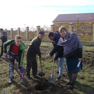 В Новопавловске появилась новая берёзовая аллея (фото 2)
