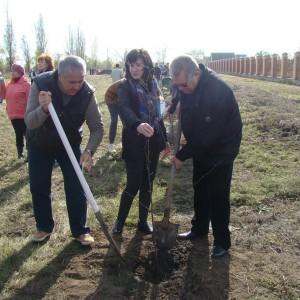В Новопавловске появилась новая берёзовая аллея (фото 3)