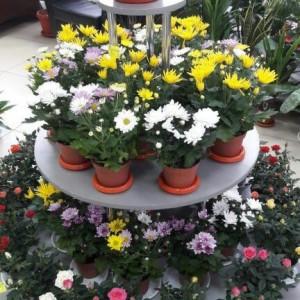 Цветы 24, павильон (ИП Воронина О.А.) (фото 3)