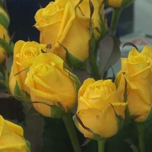 Цветы, павильон (ИП Гарбузов П.В.) (фото 2)