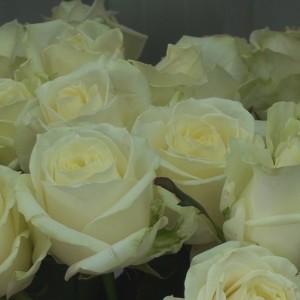 Цветы, павильон (ИП Гарбузов П.В.) (фото 1)
