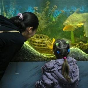 Выставка аквариумных рыб