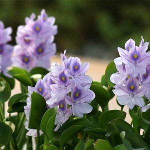 Водные растения для бассейнов и садовых композиций