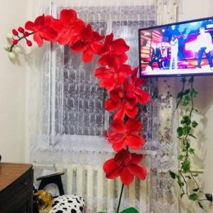 Ростовые цветы (фото 4)