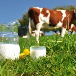 Молочные продукты с доставкой