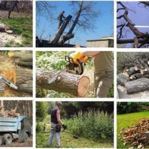 Спил деревьев любой сложности по городу и району